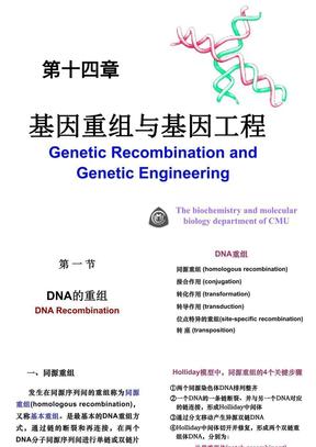 第14章 基因重组与基因工程.ppt