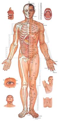 男女人体穴位图(清晰可用).pdf