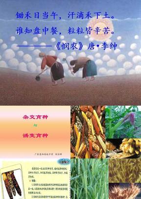 新人教版高一生物 下学期 杂交育种与诱变育种.ppt