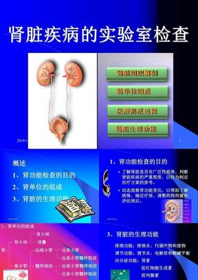 肾脏疾病的实验室检查.ppt