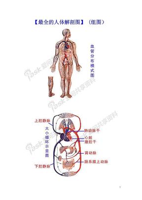 【人体解剖图解】 pdf