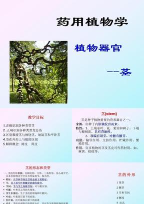 植物器官茎.ppt