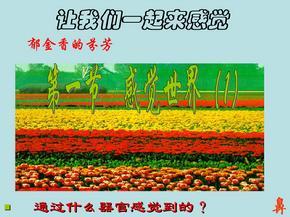 初中科学七年级下册PPT课件 2.1 感觉世界 浙教版.ppt