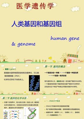 医学遗传学  人类基因和基因组.ppt