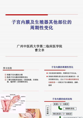 中西医结合子宫内膜及生殖器其他部位的周期性变化PPT课件.ppt