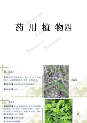 药用植物三.ppt