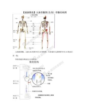 【最新精选】人体骨骼图(全身)-骨骼结构图.doc