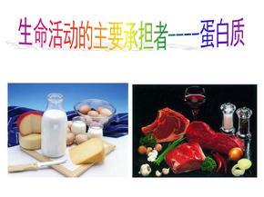 高一生物蛋白质课件.ppt
