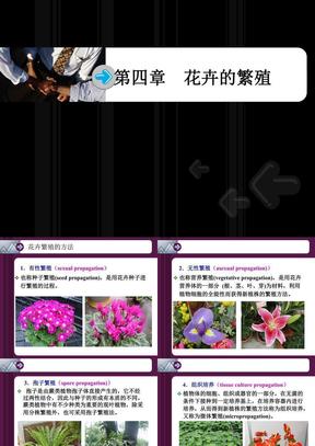 第四章  花卉的繁殖.ppt
