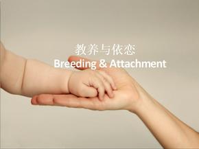 宝宝的教养与依恋亲子教育培训ppt