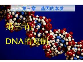 高中生物必修二DNA的复制.ppt