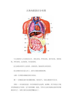 人体内脏器官分布图