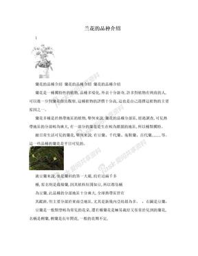 兰花的品种介绍
