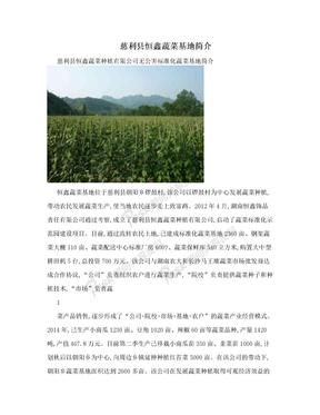 慈利县恒鑫蔬菜基地简介