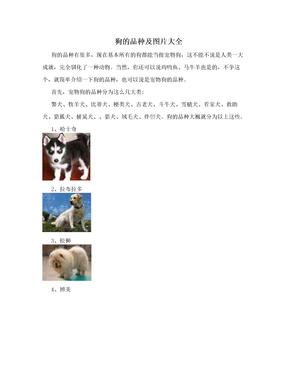 狗的品种及图片大全
