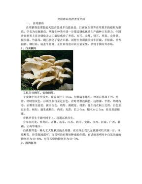 食用蘑菇的种类介绍