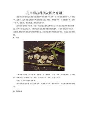 药用蘑菇种类及图文介绍