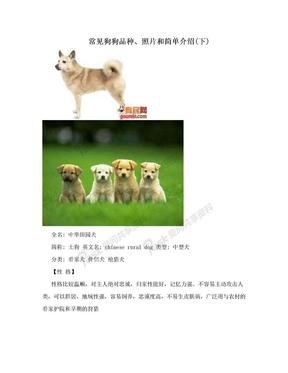 常见狗狗品种、照片和简单介绍(下)