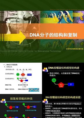 DNA的分子结构和复制