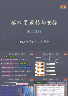 《DNA分子的结构与复制》
