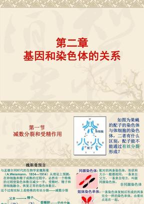 生物:2.1《减数分裂和受精作用》PPT课件(新人教必修2)01