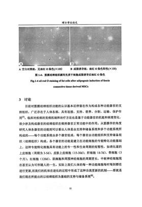 原林筋膜学8