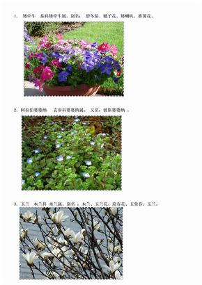 身边的植物名字大全