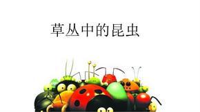 昆虫(美术教案  认识动物).ppt