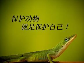 保护动物  ppt课件.ppt