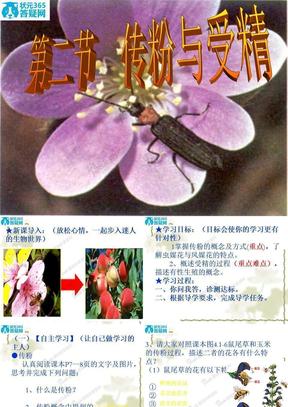 生物:4.1.2《传粉与受精》课件2(济南版八年级上)