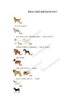 【精品文献】狗狗的品种及图片