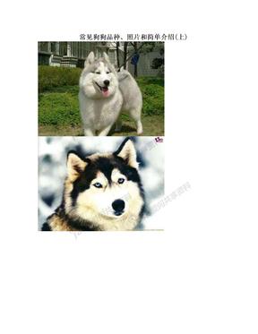 常见狗狗品种、照片和简单介绍(上)