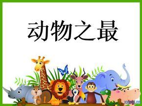 保护动物ppt课件