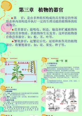 药用植物的根和茎