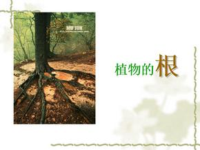 86植物的根和茎的形态结构